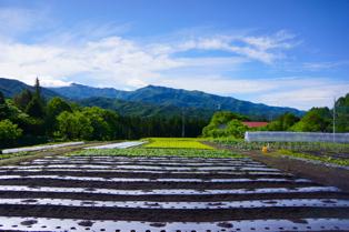耕されたミッフィー農園。