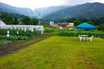 ミッフィー農園。