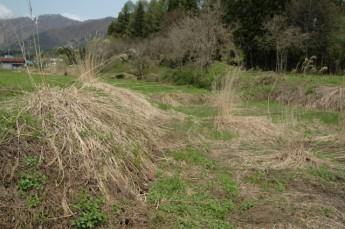耕す前のミッフィー農園。